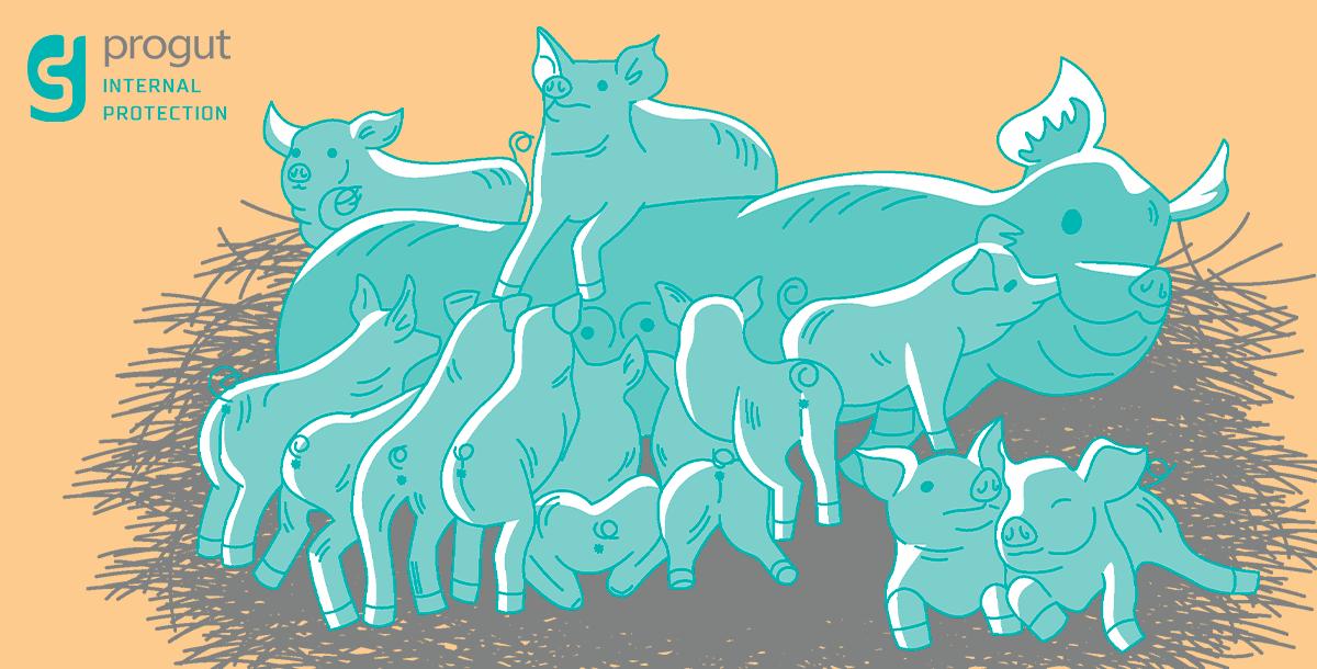 Sow Piglets Progut